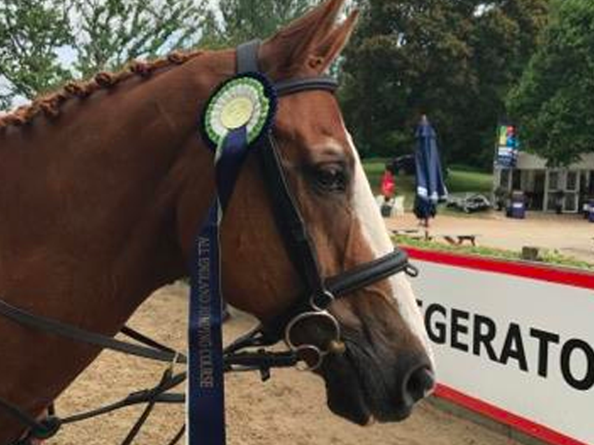 Marcel Second in Main Arena, Hickstead